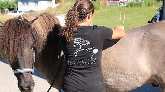 Pferdeosteophatie