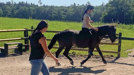 Reitunterricht mit eigenem Pferd